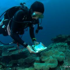 Volunteers from the UQ Underwater Club – UniDive have launched a technical report, maps, video and an impressive photo book – Flinders, Flora and Fauna, with the aim to raising awareness of reef conservation.