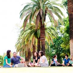 Students sitting under palm trees at UQ Gatton campus